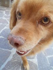 Jack (ArtForArt'sSake) Tags: orange dog pet cane jack sweet
