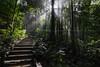 Serene Steps (Nur Ismail Photography) Tags: fujifilm rayoflight semenyih singleexposure xt1 recreationalpark sungaitekala nurismailphotography nurismailmohammed nurismail