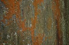 Lichens on oil tank