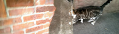Wednesday whenever catwarp (dr_loplop) Tags: brick cat wednesday time space warp portal quantum mechanics uncertainty continuum interdimensional schroedinger moglog principle notmycat allthisbutnoderek