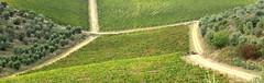 Vigne a Radda in Chianti (fotografia per passione) Tags: italy canon italia tuscany chianti siena toscana toscane raddainchianti canoniani marksoetebier markchristiansoetebier canonianiitaliani