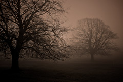Low Season (moggsterb) Tags: autumn trees sunset mist weather misty fog dusk meadow