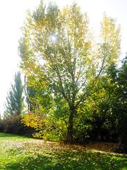 Otoo 2014 (Luis_G.) Tags: color verde luz contraluz hojas valladolid otoo