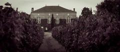 Vendanges au Château Fougas 2014 12