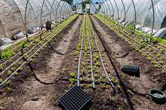 Newly Planted Rows (Anne Stephenson) Tags: autumn green horizontal earth farm soil dirt rows growing agriculture provo agricultural utahcounty newplants fallseason lanayferme