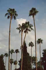 (minakelly) Tags: park trees sky nature clouds palmtrees nikond5000