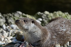I dont share (muepfel) Tags: salzburg zoo wasp otter europeanotter