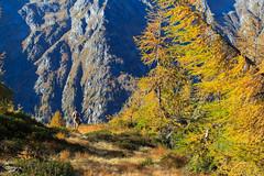Esplorando la Val Bodengo (Roveclimb) Tags: wood autumn mountain alps tree fall alberi forest trekking season hiking valle val albero autunno alpi montagna stagioni bosco escursionismo bodengo stagione esploration so passodellaporta