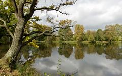 Herbst Spiegelung (Rene Stannarius) Tags: autumn fall reflections germany wasser hessen herbst harvest taunus naturpark weiher spiegelungen merzhausen