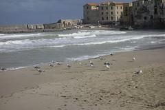 - Sicilia - Cefal - Panorama della Piccola Marina - (Pascal Guercio) Tags: cefal