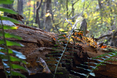 Nature (ldysw357) Tags: tree nature forest ferns