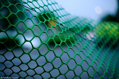 Sway (Dipti Malhotra) Tags: india green fence 50mm dof place delhi connaught