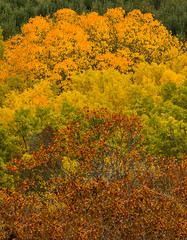 Fall Tree Tops (Michelle Coleman) Tags: autumn trees fall nova look off valley annapolis scotia