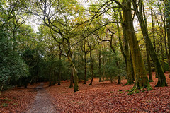Sutton Park 2014-59 (Andrew Callow) Tags: uk autumn trees red orange green fall leaves forest woodland woods europe raw foliage suttonpark lightroom d600 manualexposure perfectphotosuite 28mm18g