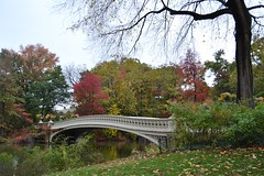 Central Park-Bow Bridge, 11.01.14 (gigi_nyc) Tags: nyc newyorkcity autumn fall centralpark fallfoliage bowbridge thelake