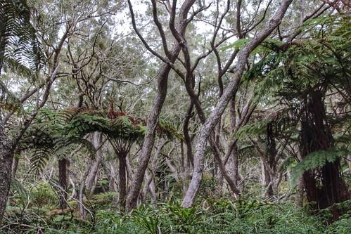 Forêt de Bebour-Belouve