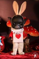 Alice in Wonderland CCC Piggies (chartar_69) Tags: ccc henwen pigdoll pigbjd charlescreaturecabinet linmurasakidesign blackresin pigballjointeddoll belleodoroki cccsbelleodoroki blackbubu