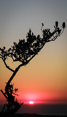 Tree Silhouette During Sunset (Tassos Giannouris) Tags: tree silhouette sunset kos greece nature sun orange black sky lonely sea horizon