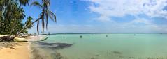 Bocas del Toro Zapazilla