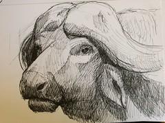Dessin d'après modèles non vivants.... (Phil. Charles) Tags: animal croquis musée dessin encre