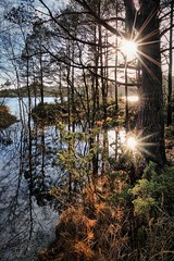 """End of trail"", Norway (Vest der ute) Tags: g7x norway rogaland røyksund tuastadvatnet water waterscape landscape lake forest sunstar trees grass reflections mirror outdoor serene sky clouds fav25 fav200"