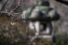 _DSC0035 (kymarto) Tags: bokeh bokehlicious zuisenji kamakura japan buddhism temple plumblossoms ume depthoffield dof oldlens vintagelens garden