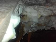20170110_134754 (Dampworks Ltd) Tags: dry rot outbreak serpula lacrymans out break spore dust