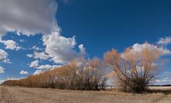 Spring will come.... (Len Langevin) Tags: spring trees alberta canada sky cloud nikon tokina 1116