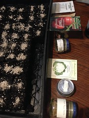 Fourth Tray (lady-ursula) Tags: seeds plantingtray zapotec blackplum tomatoes eggplant brusselsprouts madder falseindigo reneesgarden seedsofchange restorationseed