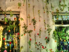 Casa con fiori 3 (Wronny) Tags: furnishings furniture milan italia italy expo exposition fair fiera market casa houser home flowers fiori appesi hanging