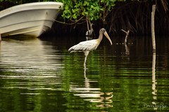 Laguna Manialtepec (308) (Danni Thompson) Tags: travel backpacker mexico october 2015 lagoon wetland bird wildlife