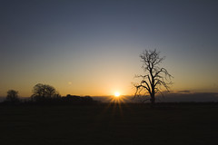 Sunsets in Lincolnshire (dagomir.oniwenko1) Tags: sleaford sunset landscape tree canoneos60d canon color nature sky