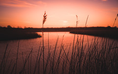 Round the Bend (SimonTHGolfer) Tags: matte england sunset plants nature water orange depthoffield sun reeds silhouette eastanglia river countryside warmcolours sky environment uk sunrise landscape suffolk