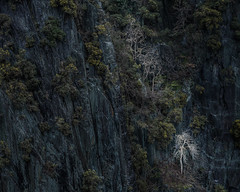 Limelight (jellyfire) Tags: landscape landscapephotography sonnartfe55mmf18za sony sonya7r sonyfe70200mmf40goss sonysonnartfe35mmf28zalens winter leeacaster snowdonia snw wales wwwleeacastercom dorothea quarry tree birch