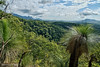 View to Mount Castle (Main Range) (Tatters ✾) Tags: australia qld cunninghamsgap mainrangenationalpark xanthorrhoea grasstree oloneo 18135mm