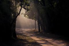 Follow the light (Thomas Retterath) Tags: india indien asia asien bandavgar 2017 nature natur baum wald forest wildlife sonnenstrahlen sunrays thomasretterath fotocompetitionbronze fotocompetition
