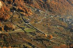 Val d'Aosta - Valle Centrale, Donnas: i vigneti (mariagraziaschiapparelli) Tags: valdaosta donnas allegrisinasceosidiventa camminata escursionismo peredrette vigneti autunno vigne