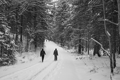 Path BW (SpotShot) Tags: sony a7 ilce7 sonya7 fe 28mm f20 28 sony28mmf20 sonyfe28mmf20 sel28f20 cold kalt snow schnee white weis todtnau badenwürttemberg deutschland blackandwhite black schwarz sw bw
