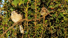 frente e verso (jakza - Jaque Zattera) Tags: campo cambará dois passarinho costas