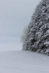 Line of tress in winter (pegase1972) Tags: quebec tree winter québec canada qc arbre hiver snow neige monteregie montérégie licensed dreamstime fotolia rf123