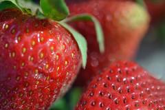 Breakfast Food (MTSOfan) Tags: strawberries red macro seeds spring