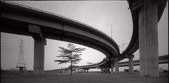under overpass ('eliat) Tags: pinhole 612 6x12 43mm shift frontrise analog fuji acros hc110b tree overpass urban cityscape riverside