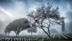 Fort Rosecrans Cemetery, San Diego (FedeSK8) Tags: sandiego california federicoscotto fedesk8 fujifilmxm1 fog fort rosecrans cemetery trees
