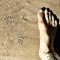 Pawprints. Stephens Beach. South West Tasmania.