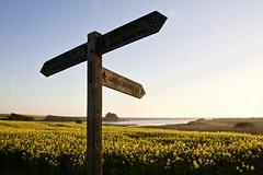 Pointing the way. (Margaret Preuss-Higham) Tags: signpost oilseedrape flowers water fleetlagoon canon700 dorset yellow