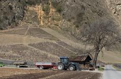 campagne valaisanne (bulbocode909) Tags: valais suisse campagne tracteurs arbres vignes guérites remorques bleu rouge printemps nature