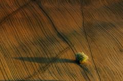 Light on the Hills (emanuelezallocco) Tags: light hills nature landscape landscapes italy marche ilikeitaly ilikemarche peace calm relax shadows sunset place natura panorama paesaggio marchigiano luce tramonto colori ombre albero colline pentax ricohimaging ricoh tamron