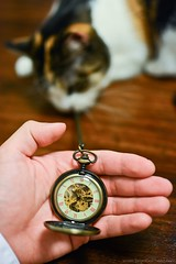 277/365 Oct 4 (BrianGoPhoto) Tags: selfportrait cat photography time watch 365 pocketwatch project365 365project