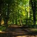 Botanischer Garten Rombergpark, Dortmund - Deutschland (Jardim Botânico Parque Romberg, Dortmund - Alemanha)