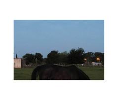 (EL Carposaurio) Tags: horse argentina caballo